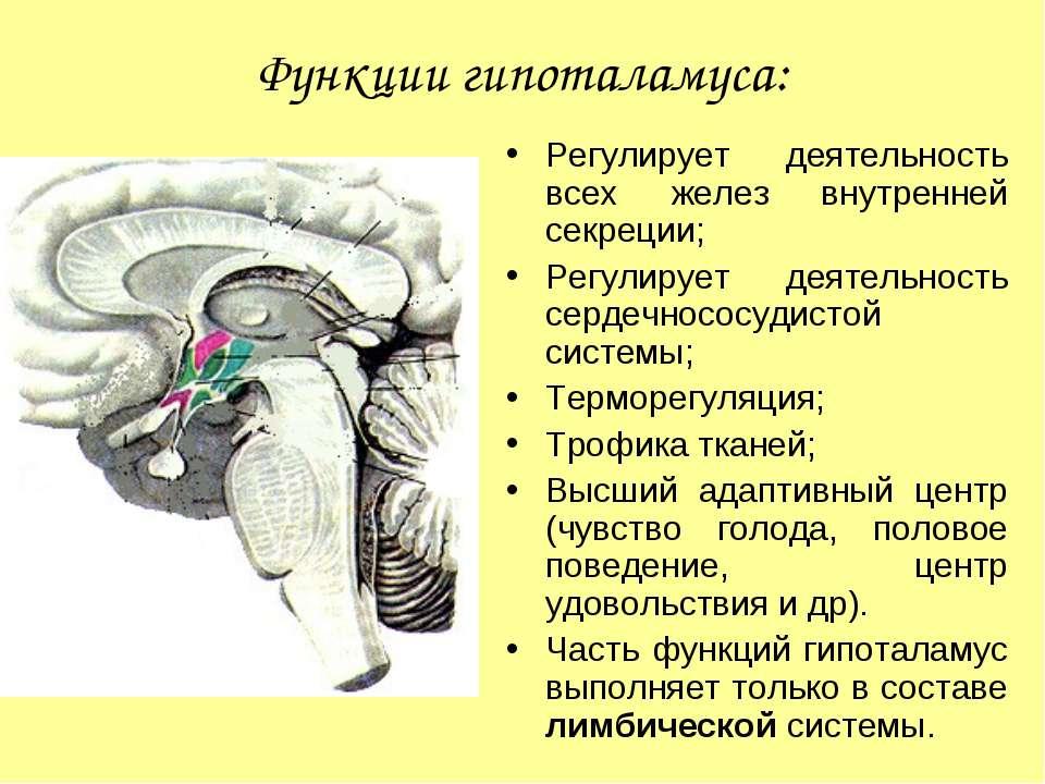 Функции гипоталамуса: Регулирует деятельность всех желез внутренней секреции;...
