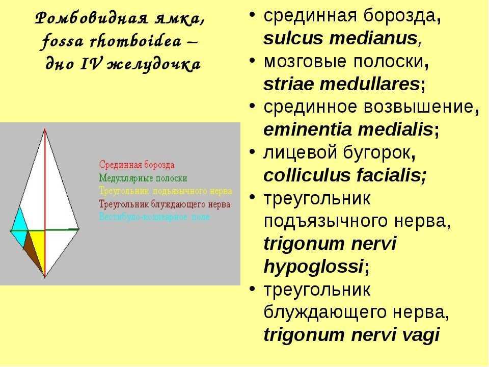 Ромбовидная ямка, fossa rhomboidea – дно IV желудочка срединная борозда, sulc...