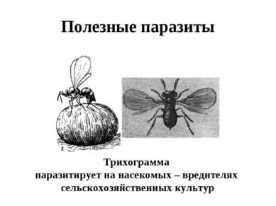Полезные паразиты Трихограмма паразитирует на насекомых – вредителях сельскох...