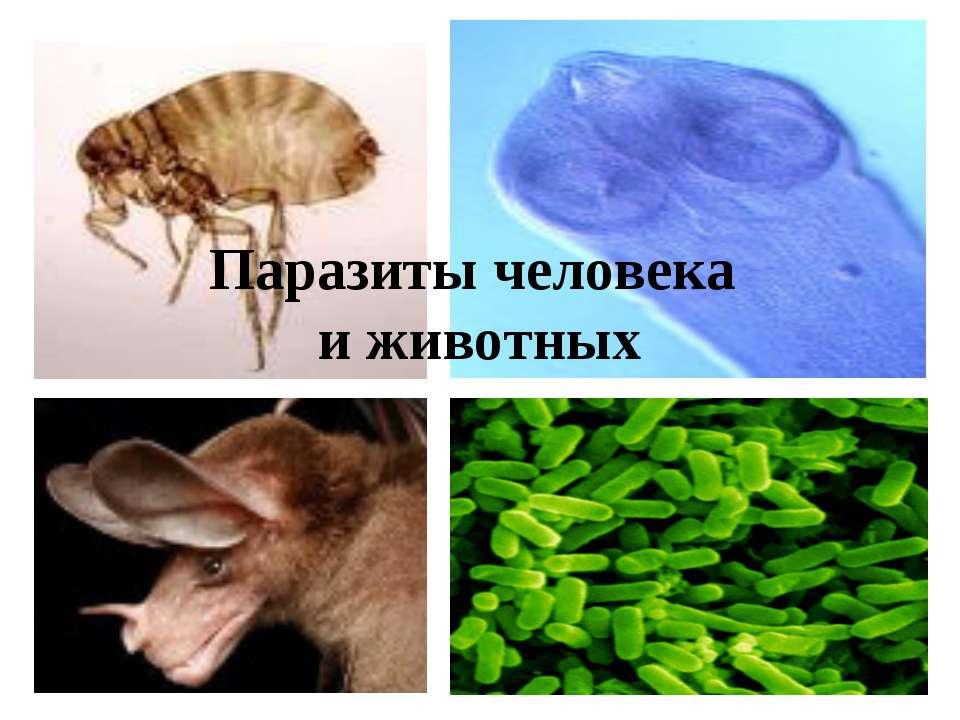 Паразиты человека и животных