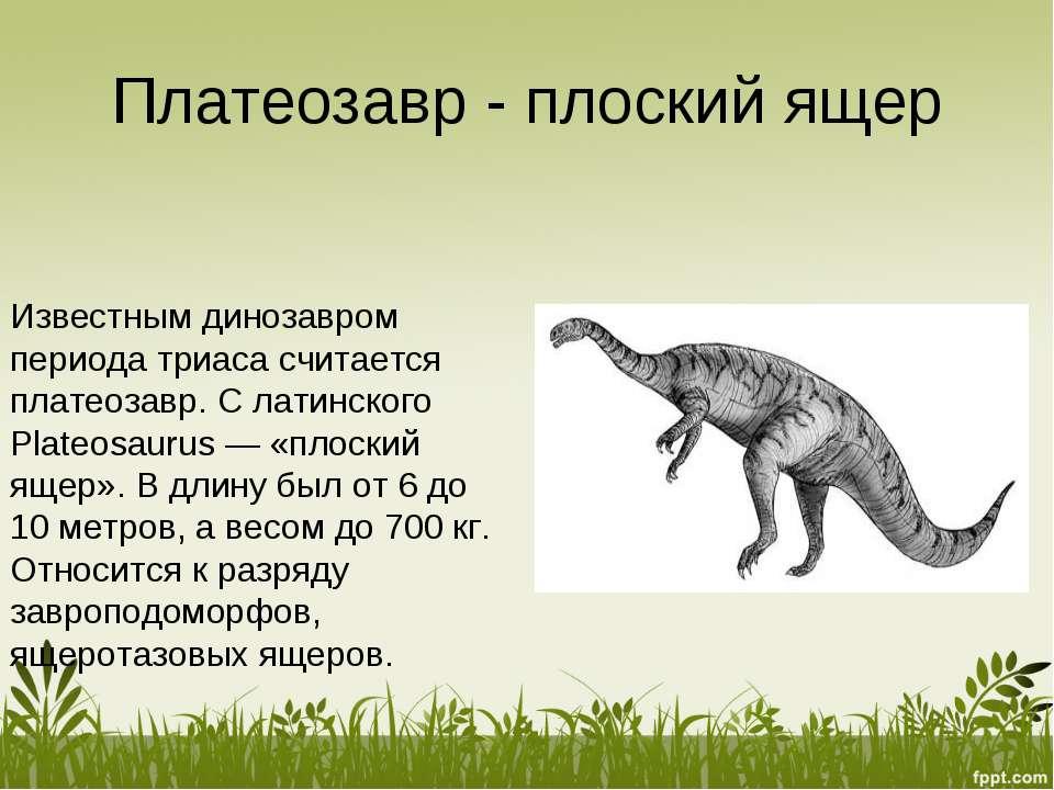 Платеозавр - плоский ящер Известным динозавром периода триаса считается плате...
