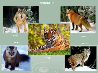 хищники волк соболь тигр лиса рысь