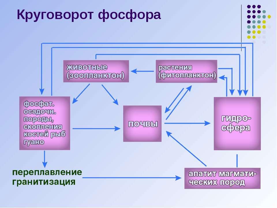 Круговорот фосфора