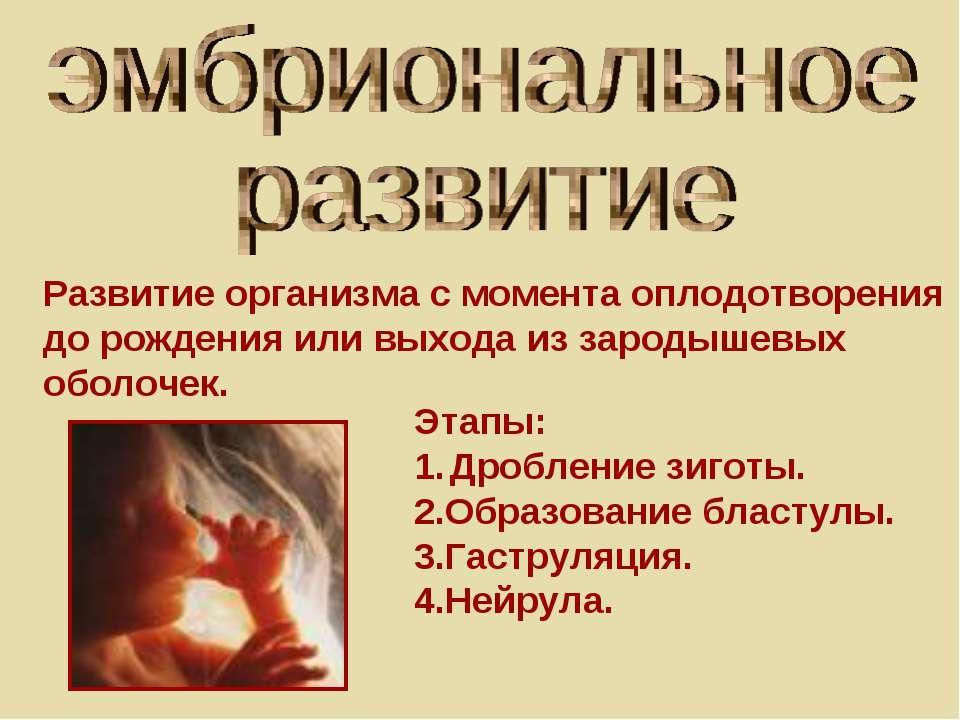 Развитие организма с момента оплодотворения до рождения или выхода из зародыш...