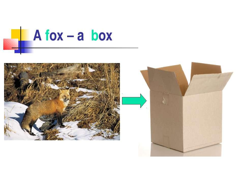 A fox – a box