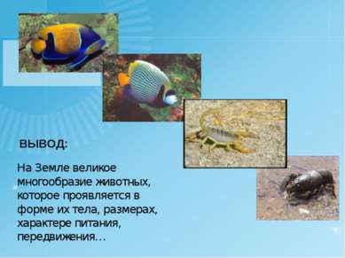 ВЫВОД: На Земле великое многообразие животных, которое проявляется в форме их...