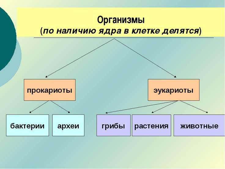 Организмы (по наличию ядра в клетке делятся) прокариоты эукариоты археи бакте...