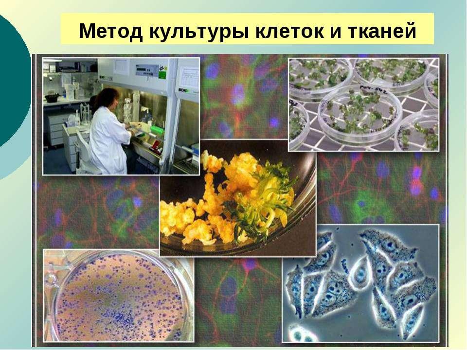 Метод культуры клеток и тканей