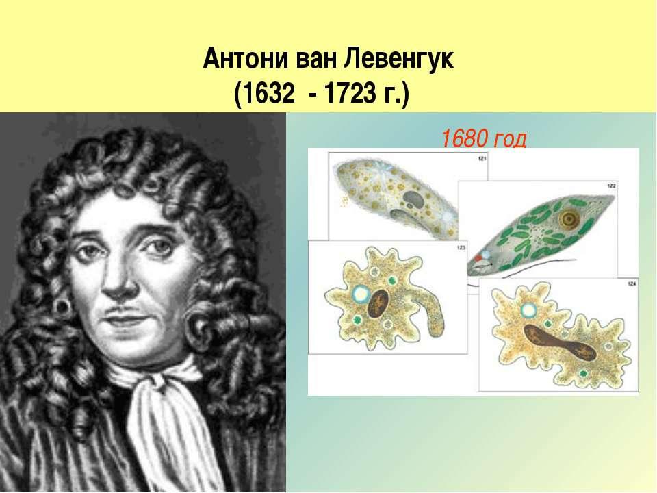 Антони ван Левенгук (1632 - 1723 г.) 1680 год Описал с большой точностью, наб...