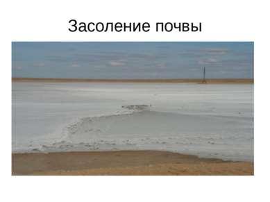 Засоление почвы