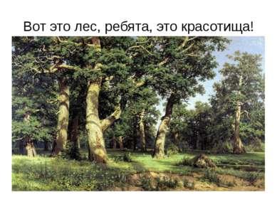 Вот это лес, ребята, это красотища!