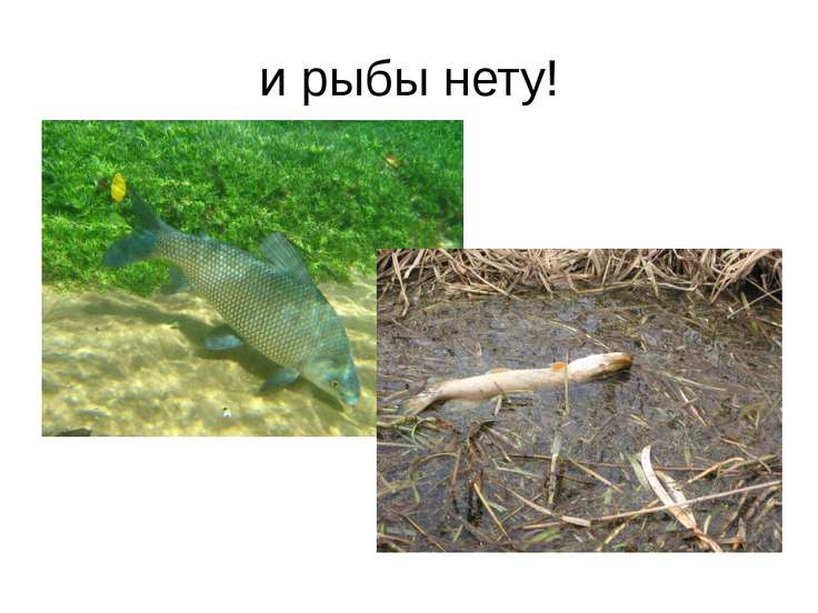 и рыбы нету!
