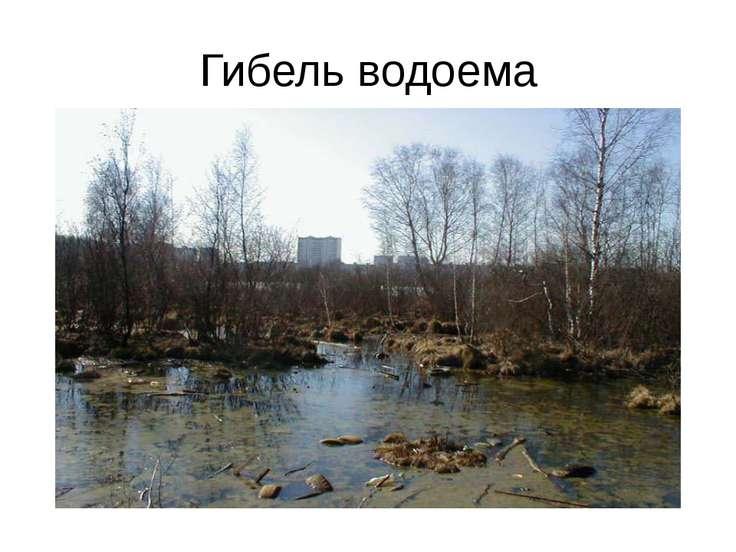 Гибель водоема