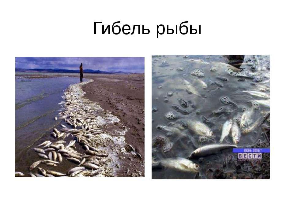 Гибель рыбы