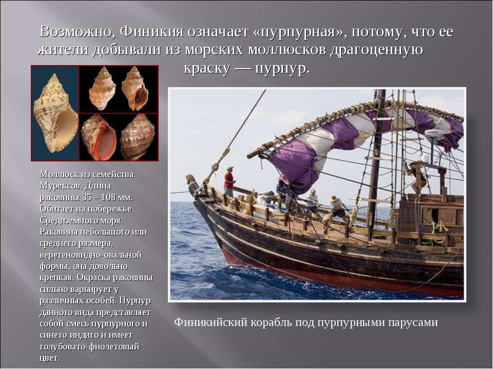 Возможно, Финикия означает «пурпурная», потому, что ее жители добывали из мор...