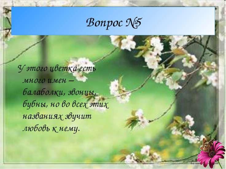 Вопрос №5 У этого цветка есть много имен – балаболки, звонцы, бубны, но во вс...