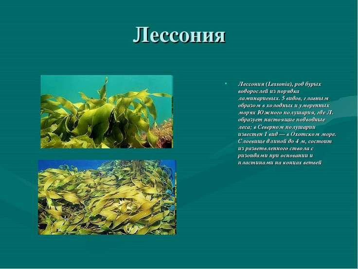 Лессония Лессония (Lessonia), род бурых водорослей из порядка ламинариевых. 5...