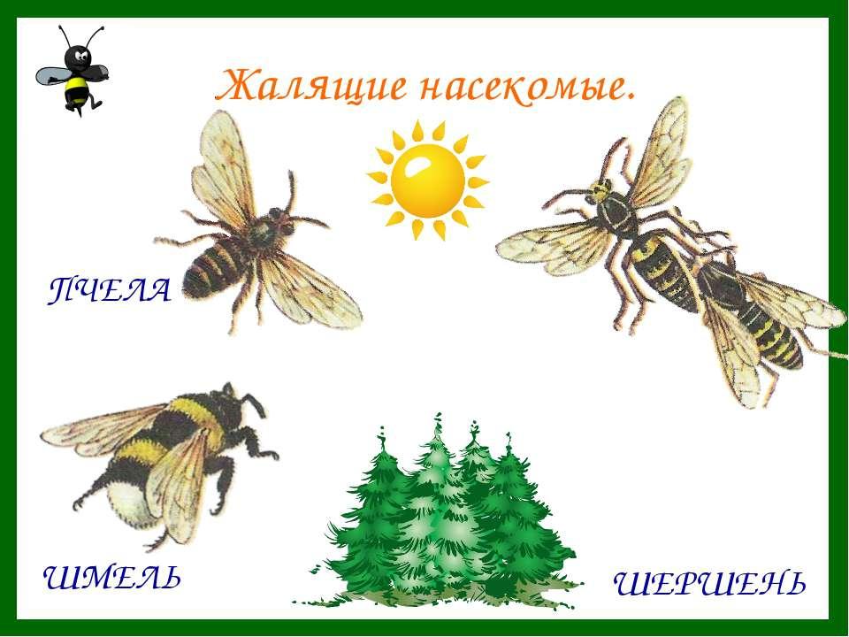 Жалящие насекомые.