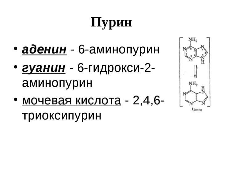 Пурин аденин - 6-аминопурин гуанин - 6-гидрокси-2-аминопурин мочевая кислота ...