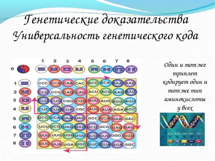 Генетические доказательства Универсальность генетического кода Один и тот же ...