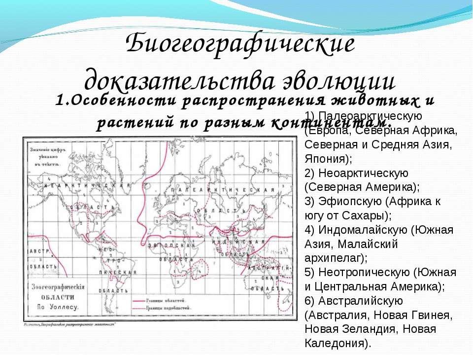 Биогеографические доказательства эволюции 1) Палеоарктическую (Европа, Северн...