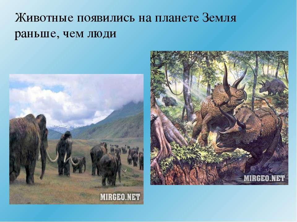 Животные появились на планете Земля раньше, чем люди