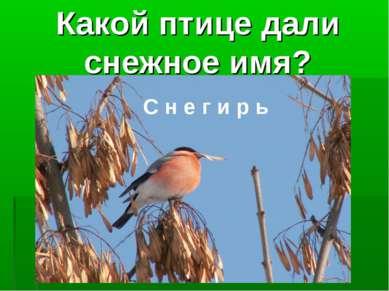 Какой птице дали снежное имя? С н е г и р ь