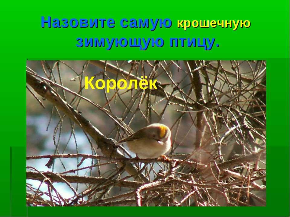 Назовите самую крошечную зимующую птицу. Королёк