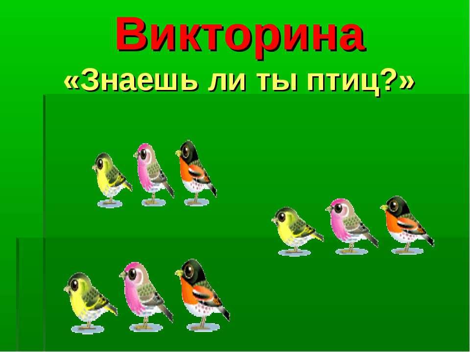 Викторина «Знаешь ли ты птиц?»
