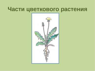 Части цветкового растения