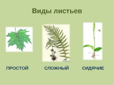 Виды листьев ПРОСТОЙ СЛОЖНЫЙ СИДЯЧИЕ