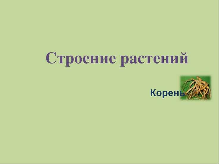 Строение растений Корень