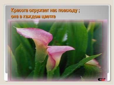 Красота окружает нас повсюду ; она в каждом цветке