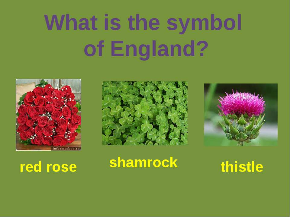 What is the symbol of England? red rose shamrock thistle