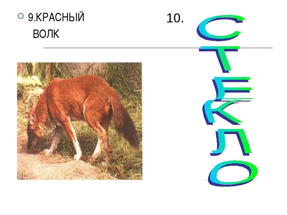 9.КРАСНЫЙ ВОЛК 10.
