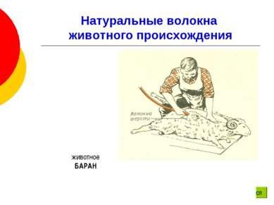 Натуральные волокна животного происхождения животное БАРАН сл