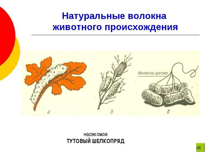 Натуральные волокна животного происхождения насекомое ТУТОВЫЙ ШЕЛКОПРЯД сл