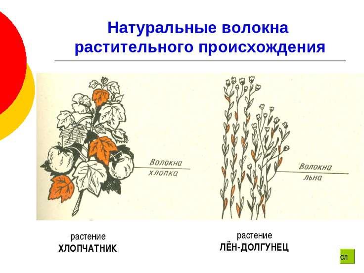 Натуральные волокна растительного происхождения растение ХЛОПЧАТНИК растение ...