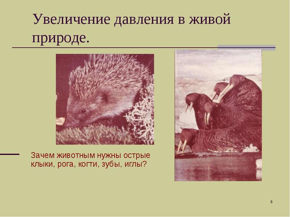 * Зачем животным нужны острые клыки, рога, когти, зубы, иглы? Увеличение давл...