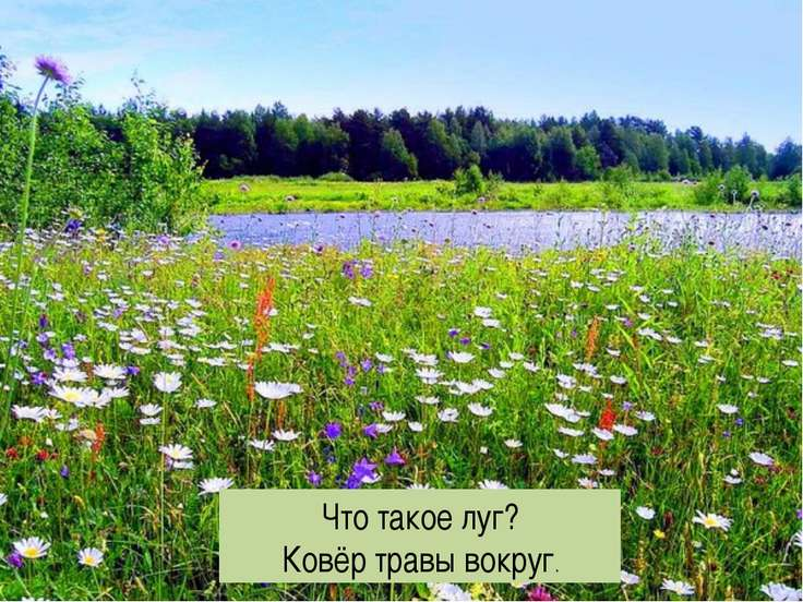 Что такое луг? Ковёр травы вокруг.