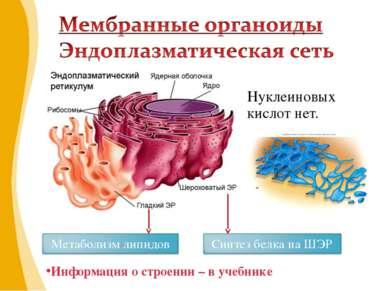 Нуклеиновых кислот нет. Информация о строении – в учебнике