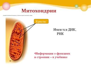 Информация о функциях и строении – в учебнике Имеются ДНК, РНК Кристы