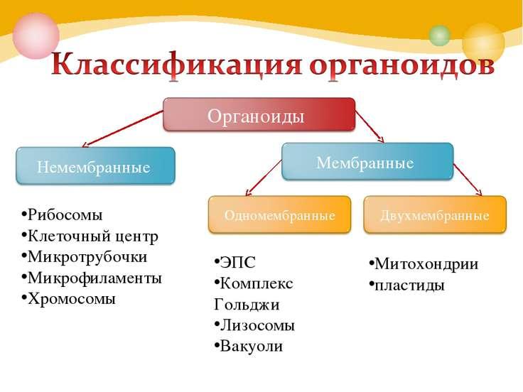 Презентация на тему митохондрии