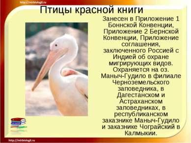 Птицы красной книги Занесен в Приложение 1 Боннской Конвенции, Приложение 2 Б...