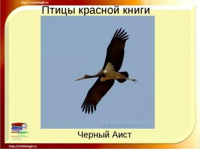 Птицы красной книги Черный Аист