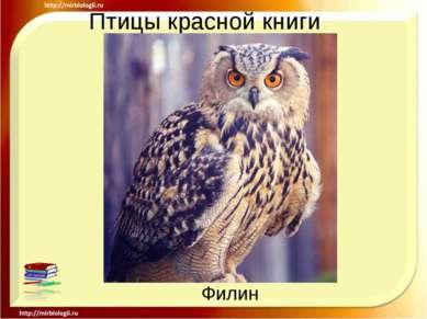 Птицы красной книги Филин
