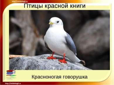 Птицы красной книги Красноногая говорушка