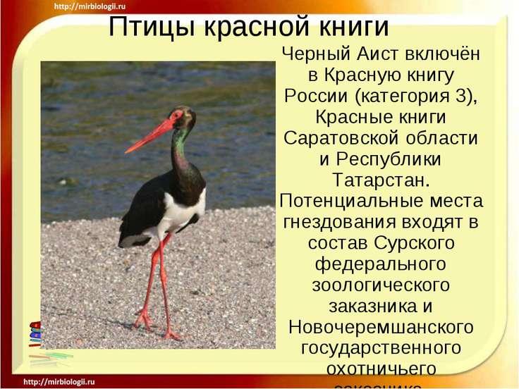 Птицы красной книги Черный Аист включён в Красную книгу России (категория 3),...