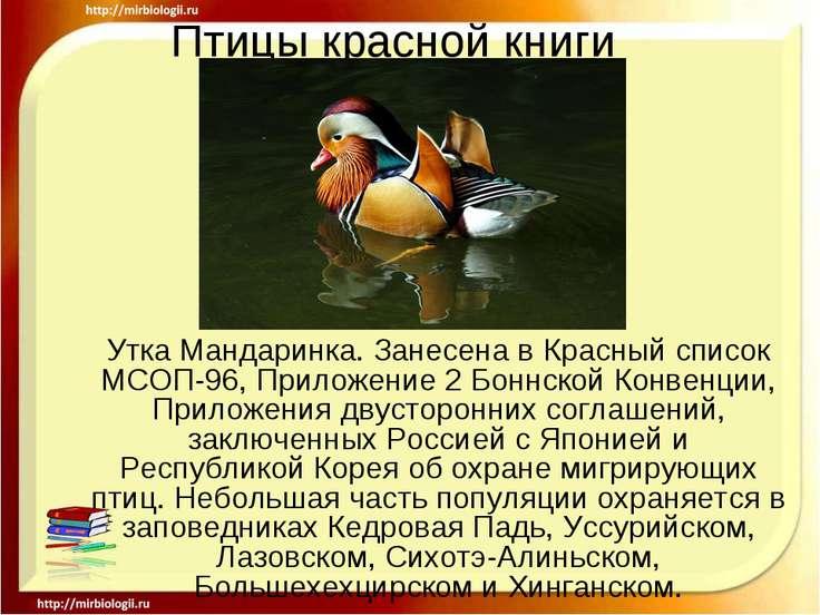 Птицы красной книги Утка Мандаринка. Занесена в Красный список МСОП-96, Прило...