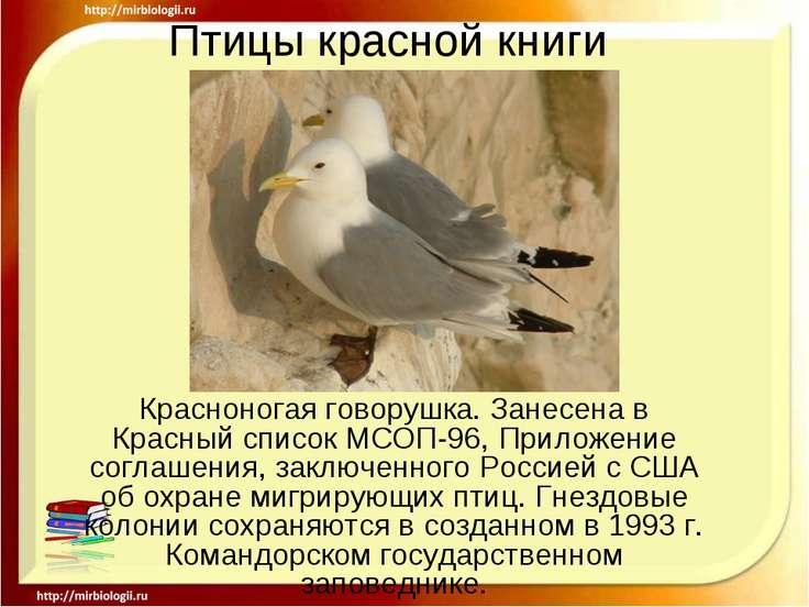 Птицы красной книги Красноногая говорушка. Занесена в Красный список МСОП-96,...
